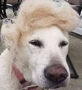 ebay-wig